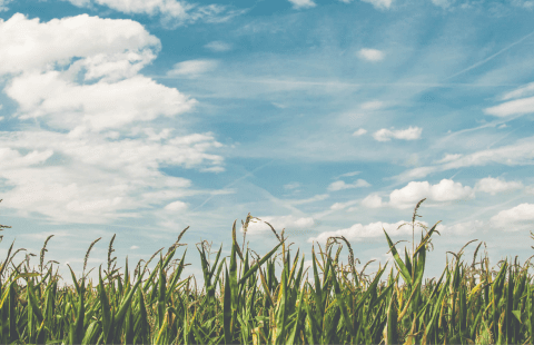 field with blue sky and clouds in the background
