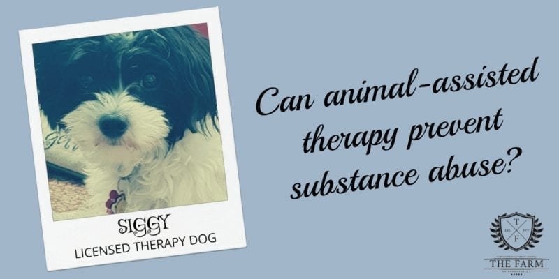 Can Animal-Assisted Therapy Prevent Sustance Abuse?