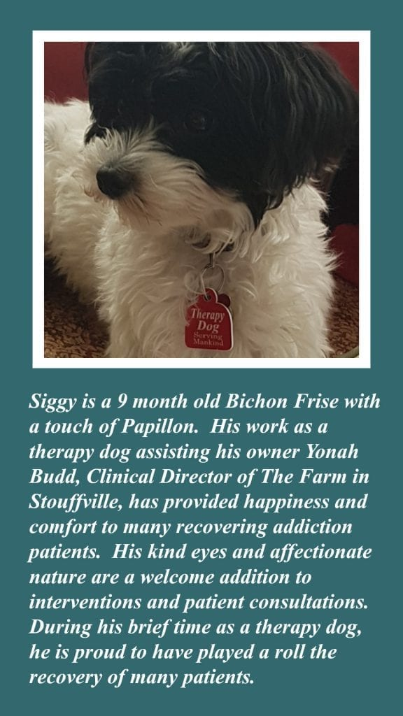 Siggy The Therapy Dog