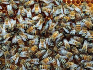 Bees arrived to Calabogie Peaks - Local foods